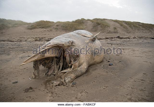 ynyslas-beach-near-aberystwyth-wales-uk-26th-december-2015-the-badly-fabkcf